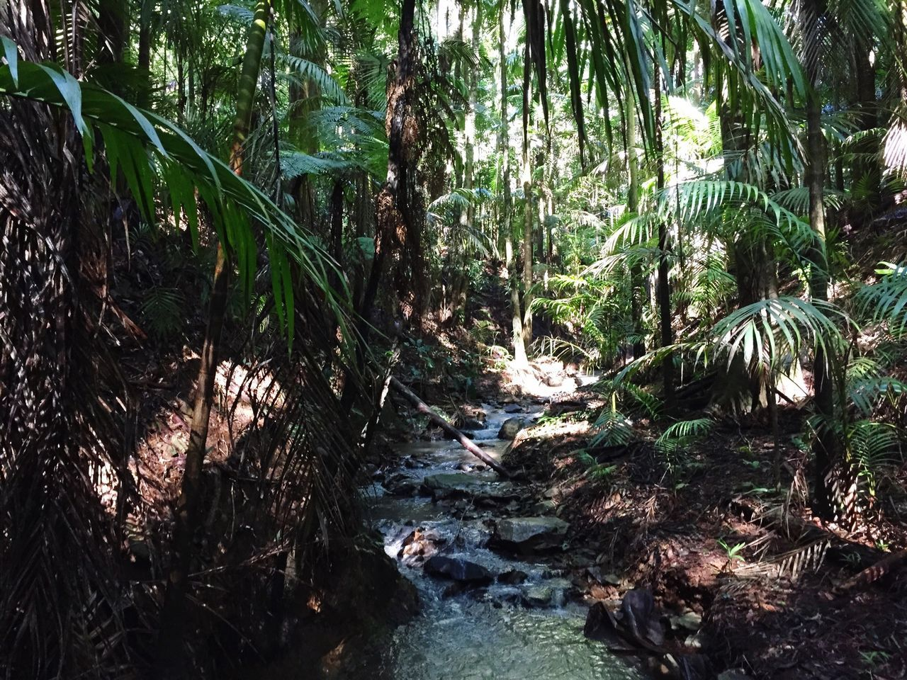 Beautiful stock photos of rainforest, Branch, Day, Flowing Water, Forest