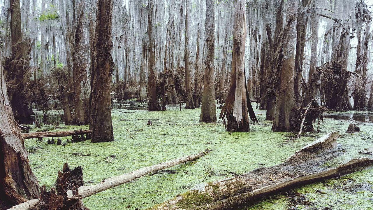Caddo Lake Canoe & Trees Canoeing Uncertain, TX Adventure Lakes, Parks, Nature