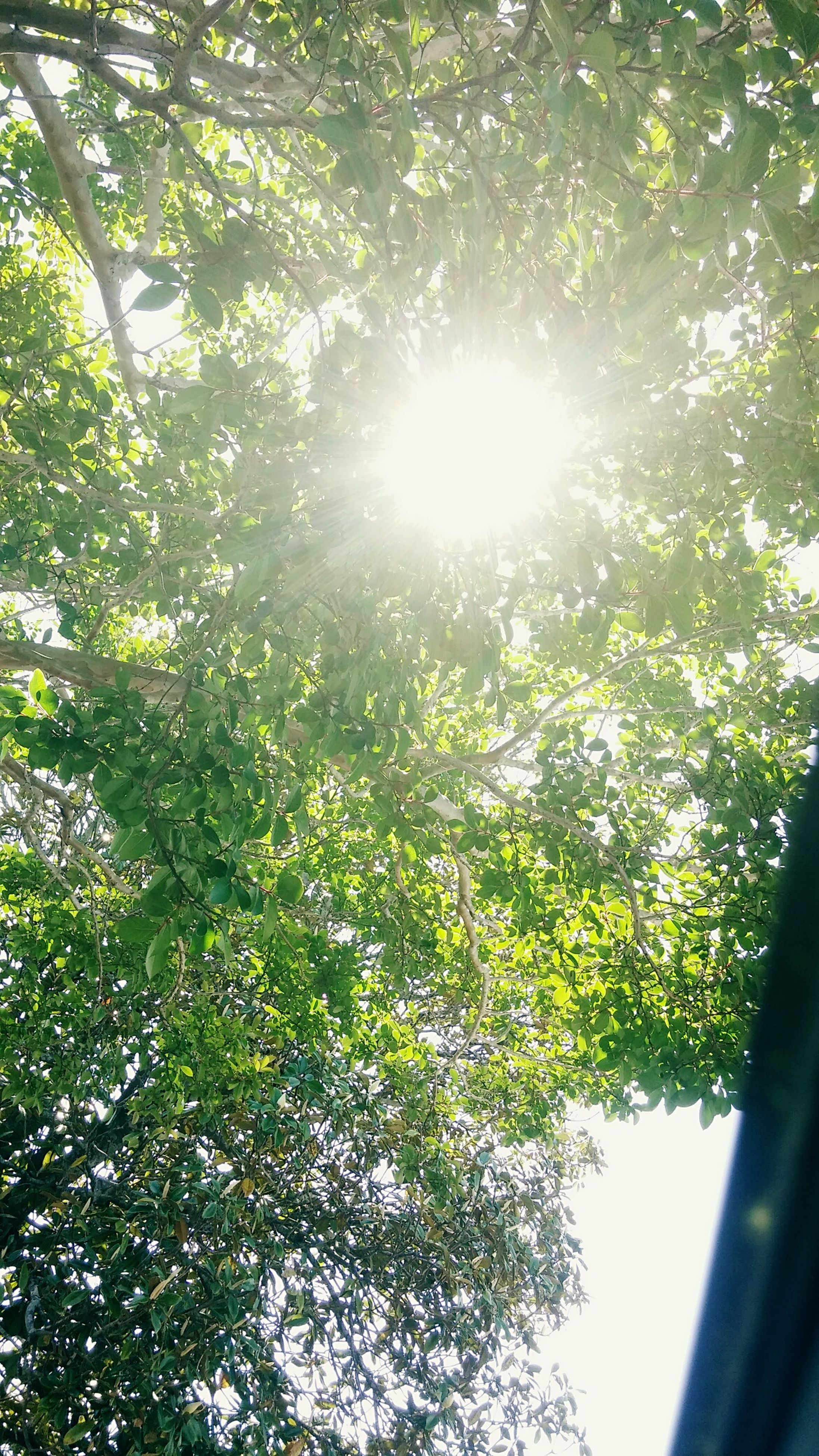 growth, tree, sun, sunlight, sunbeam, nature, green color, beauty in nature, lens flare, branch, sunny, leaf, low angle view, day, plant, tranquility, no people, outdoors, bright, sky