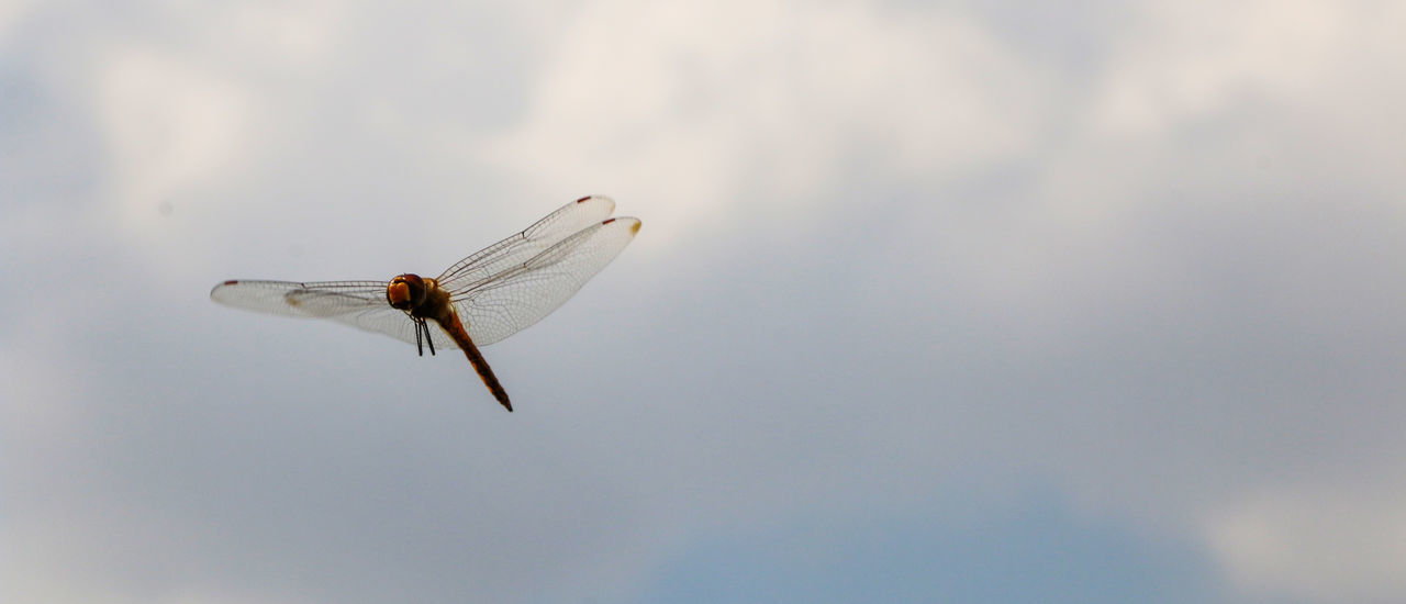 Low Angle View Of Dragonfly Against Cloudy Sky