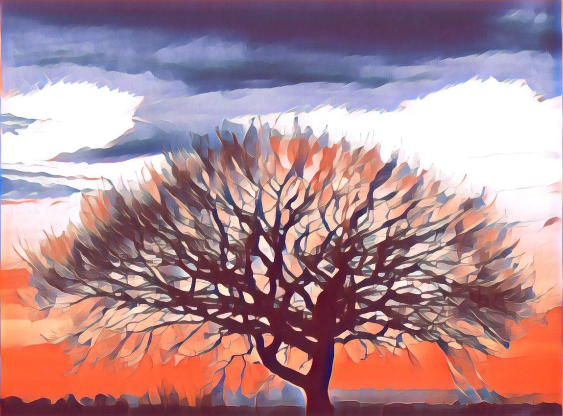 Posterised tree Sky Beauty In Nature Tranquility Nature Sunset Scenics No People Outdoors Day Poster Art Posterized Tree Impression Pop Art Inspired