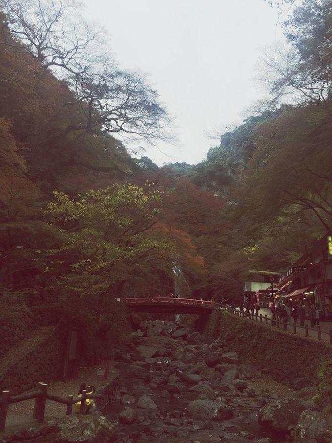 #紅葉の天ぷら#箕面の滝#箕面#紅葉#秋#autumn#散歩