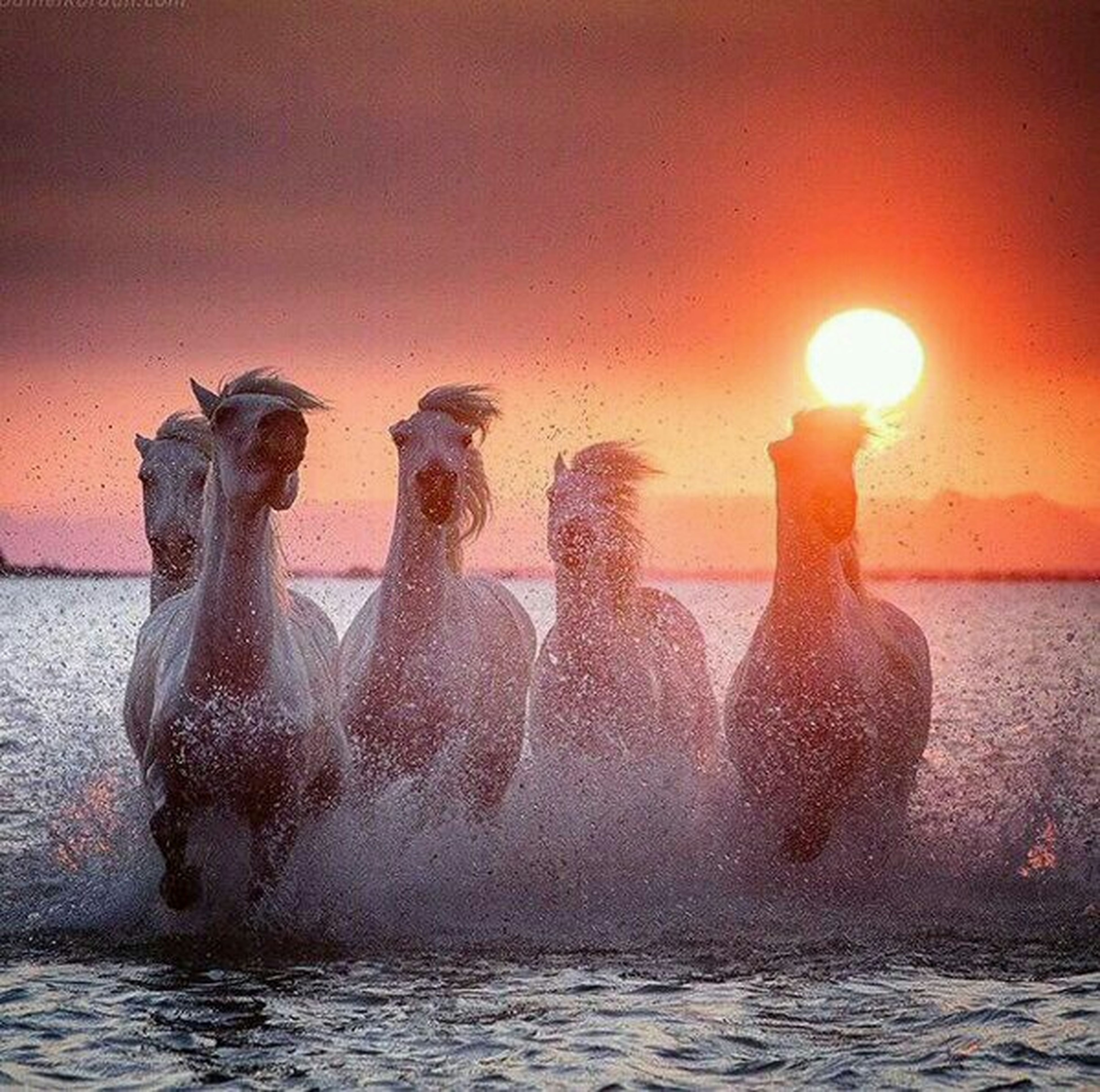 water, splashing, waterfront, sunset, motion, sea, orange color, animal themes, reflection, fountain, outdoors, no people, nature, bird, one animal, sunlight, rippled, animals in the wild, wave, sun