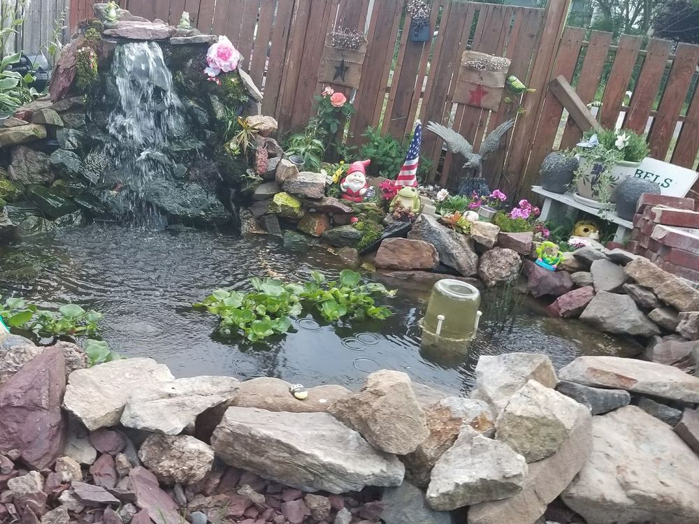 Our pond 2