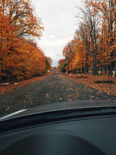 Road Tree Car Autumn Outdoors Michigan Fall Leaves🌿