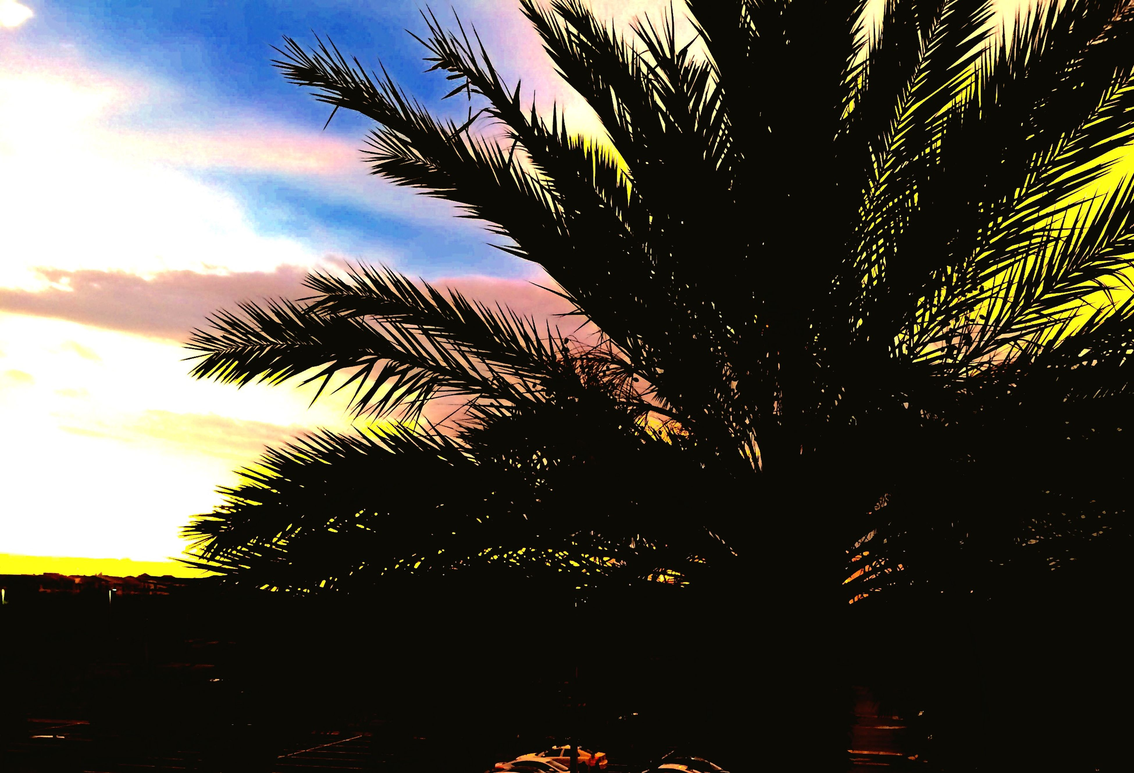 tree, palm tree, silhouette, sky, low angle view, growth, sunset, nature, tranquility, beauty in nature, branch, scenics, outdoors, cloud - sky, no people, tranquil scene, leaf, sunlight, sun, dusk