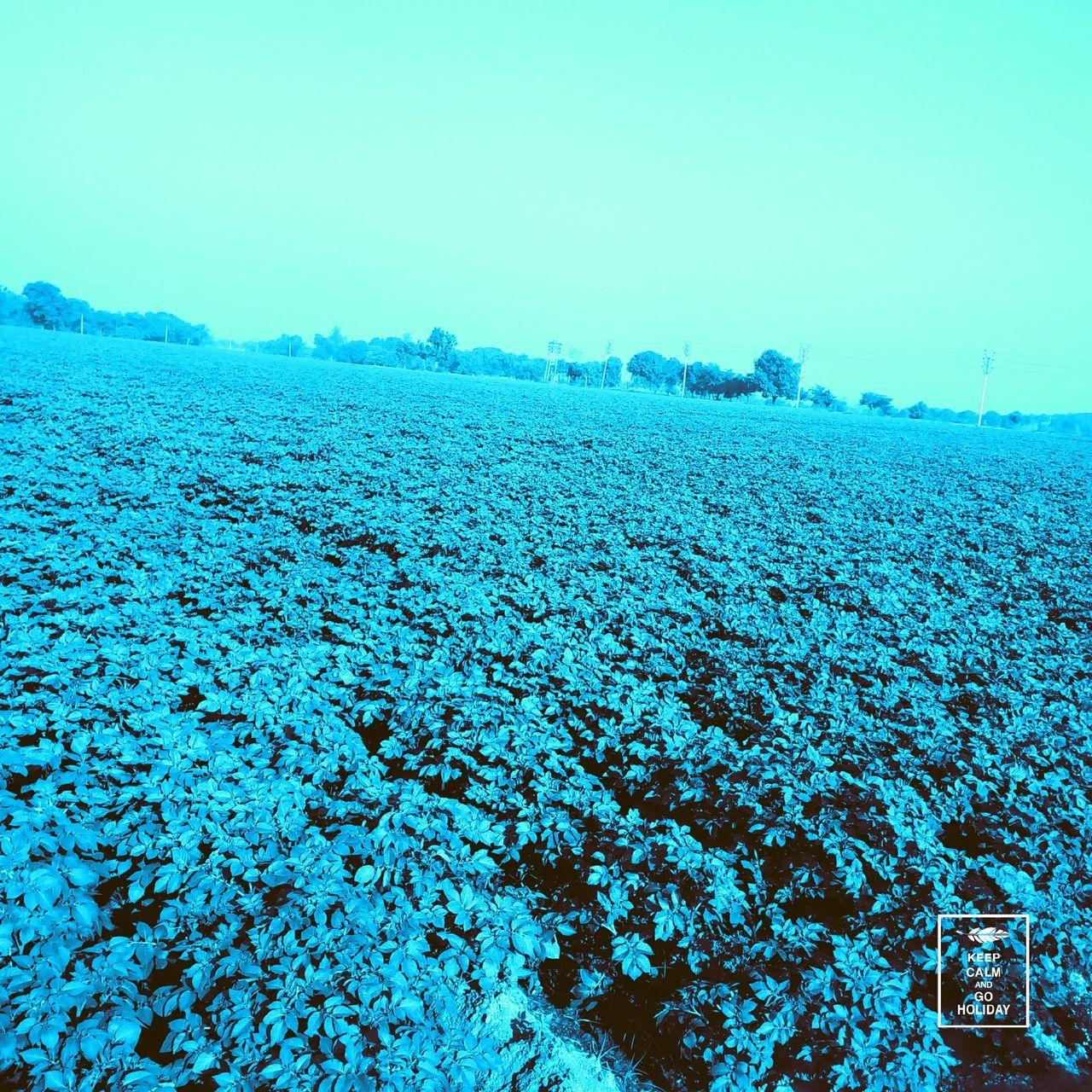 Field of potato EyeEmNewHere