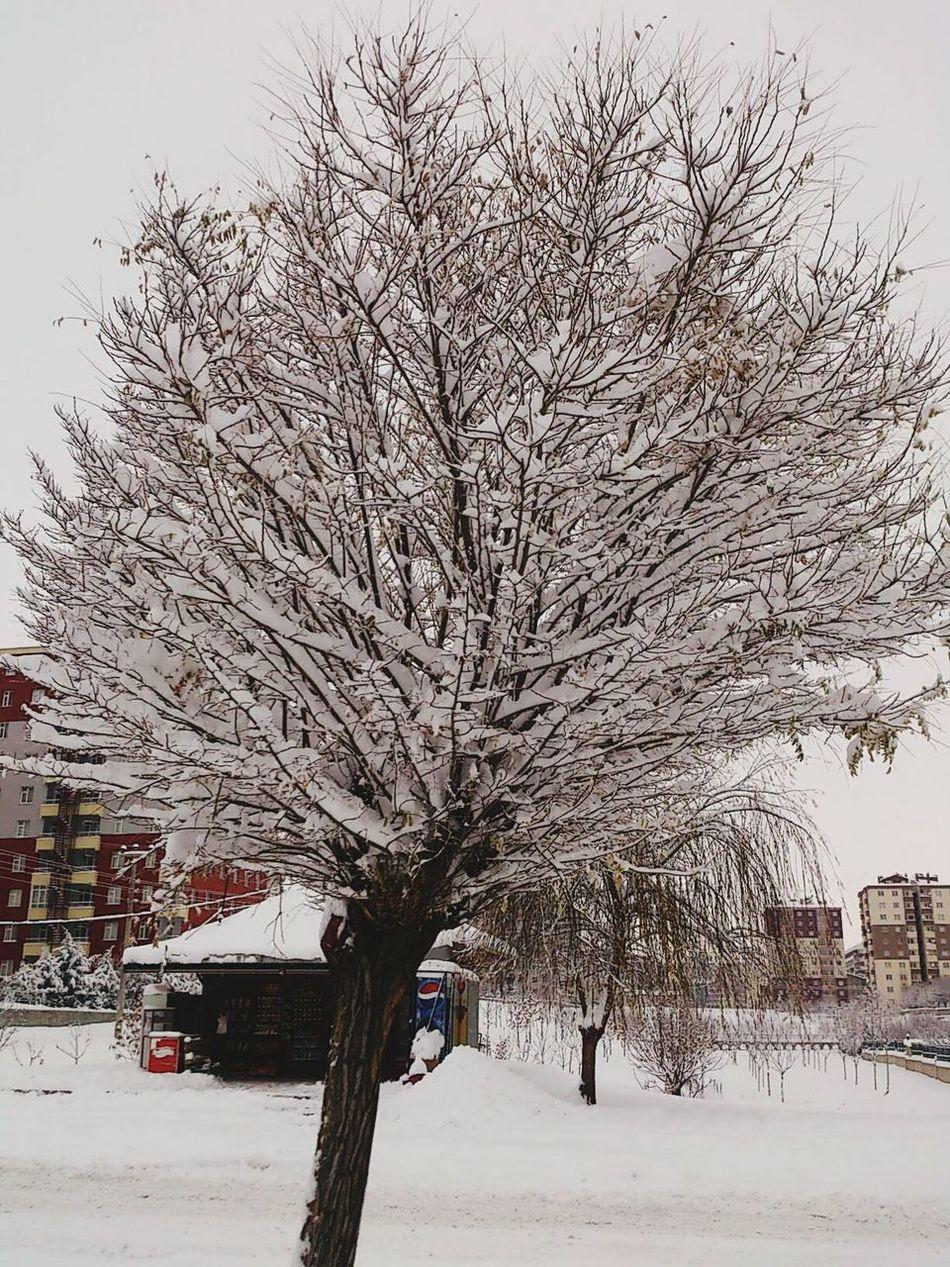 Konya Konyagram Turkeyphotooftheday Türkiye Cold Temperature Sky No People Snow Tree Winter Branch Nature Snowing Bare Tree Outdoors Day First Eyeem Photo
