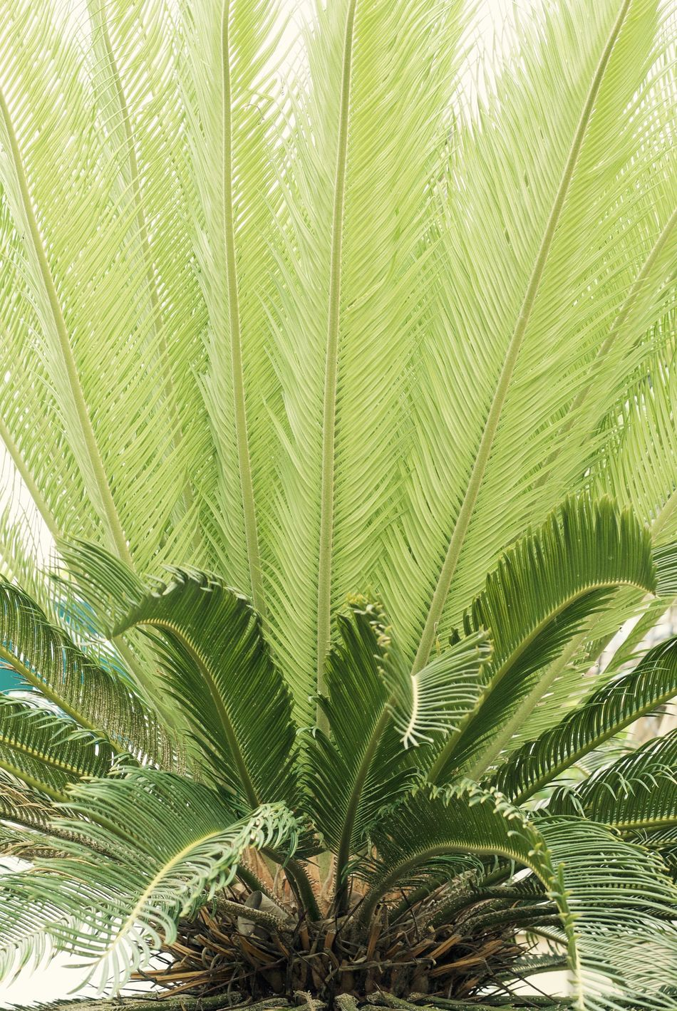 Beauty In Nature Close-up Day Freshness Frond Green Color Growth Leaf Nature No People Outdoors Palm Leaf Palm Tree Plant Tree