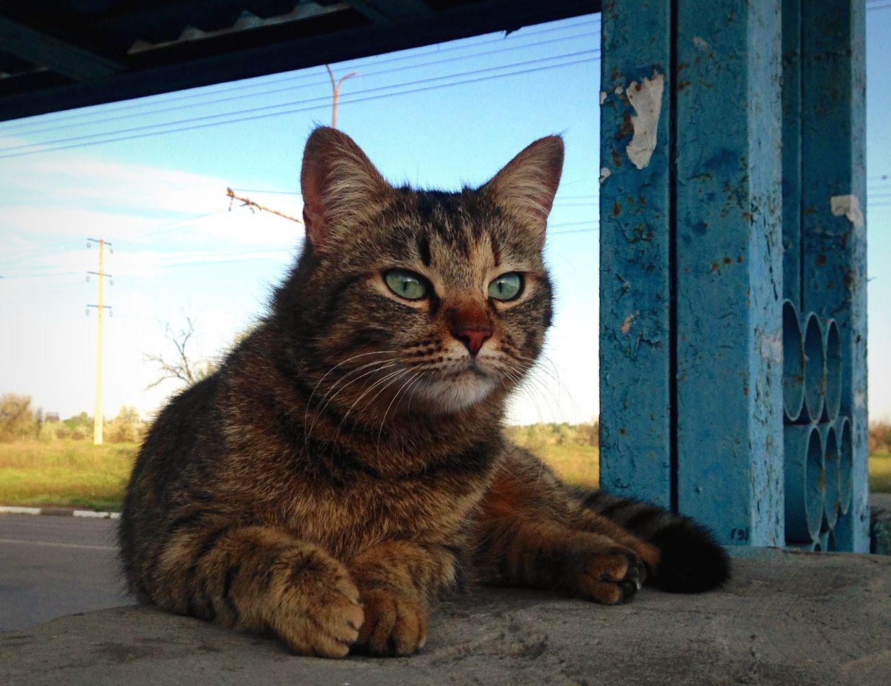 Коты котэ кот Homeless Cats Cat♡ Cats Cat Cats Of EyeEm Cat Lovers