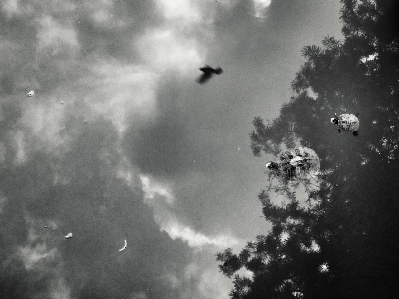 Flyng Turtles Nature_collection Nature Photography Blackandwhite Black&white Monochrome Animals Sky And Clouds Showing Imperfection