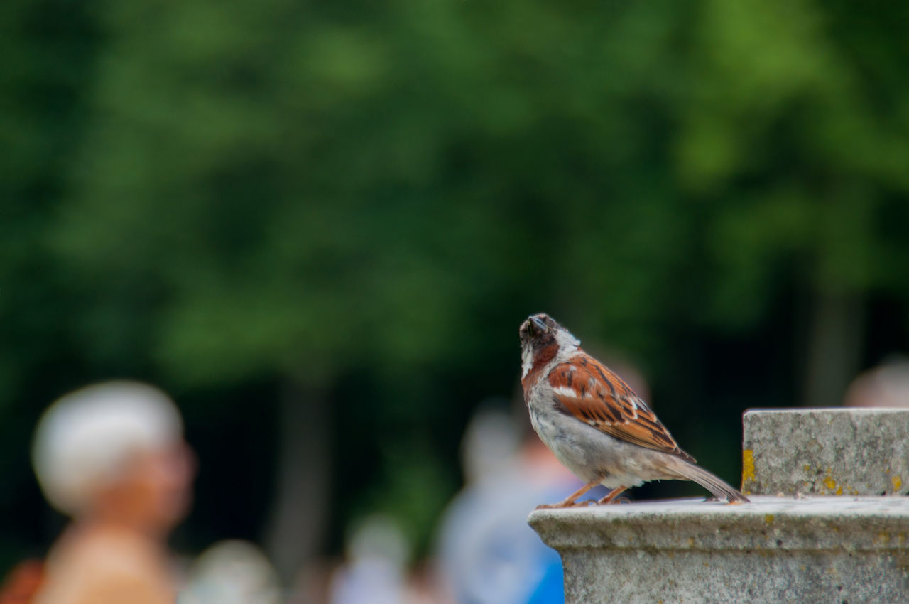 animal themes, bird, animals in the wild, animal wildlife, one animal, focus on foreground, day, outdoors, perching, nature, no people, beauty in nature, close-up