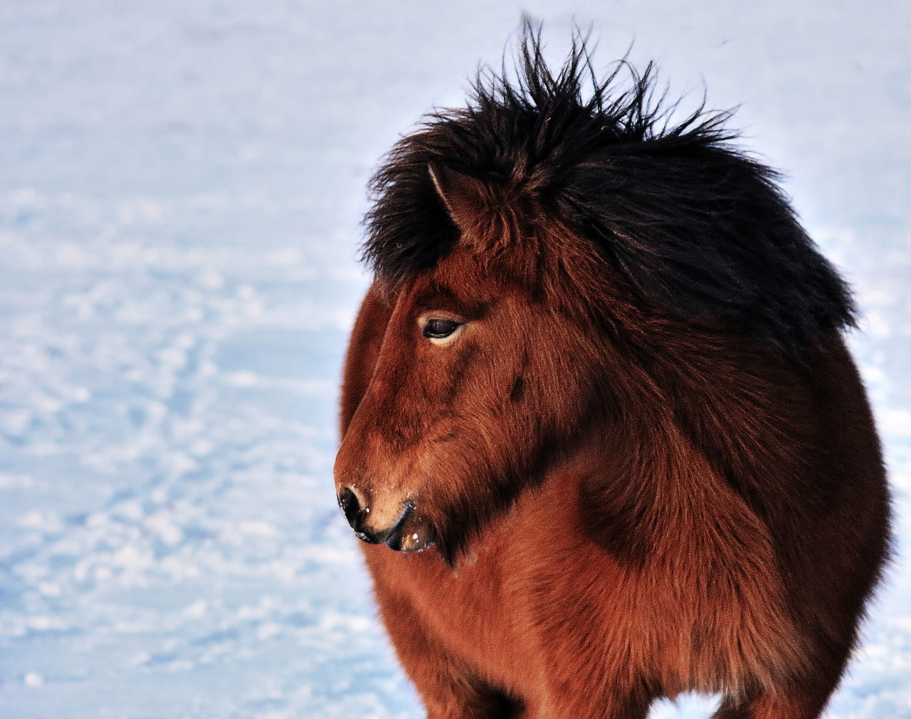 Close-Up Of Horse Standing On Snow Covered Field