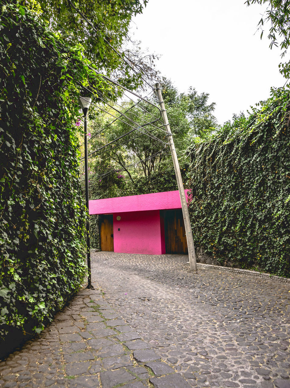 Abstract Abstract Photography Agave Architecture Architecture Building Exterior Built Structure City Composition Day Flowers Green Color Growth Landscape Modern Modern Architecture Nature Nature Photography No People Outdoors Plant San Angel Street Streetphotography Tree