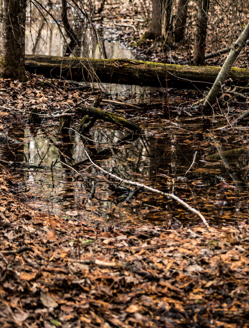 nature, no people, outdoors, tree, swamp, reflection, day, water, one animal, forest, reptile, animal themes, tree trunk, branch, animals in the wild, beauty in nature, alligator, close-up