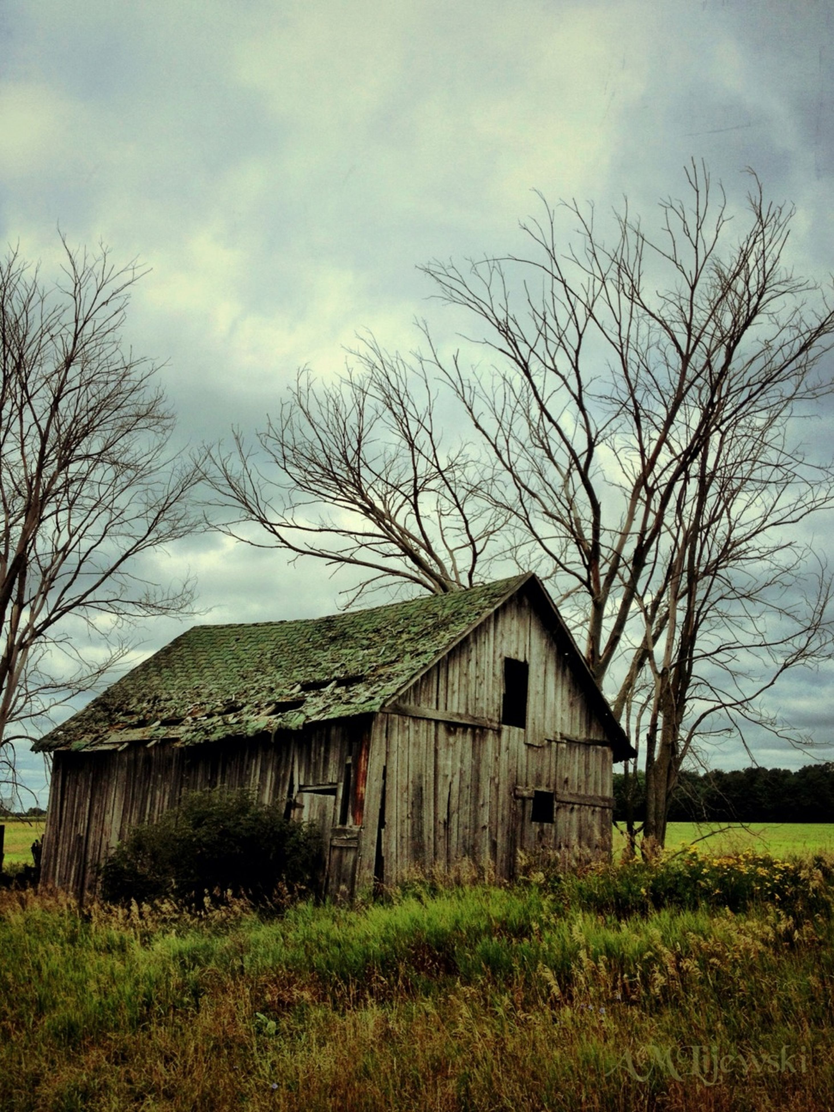 bare tree, architecture, built structure, building exterior, sky, house, tree, field, grass, barn, branch, cloud - sky, rural scene, abandoned, old, landscape, residential structure, cloud, nature, tranquility
