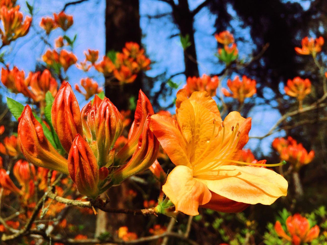 Orange By Motorola Flowerporn Nature IPhoneography Vscocam Alchemy Flowers