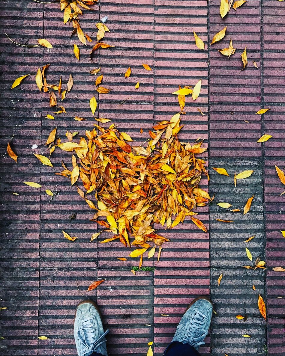 Directly Above Leaf Autumn Low Section Day Outdoors Human Leg Plant Human Body Part One Person Nature Close-up People