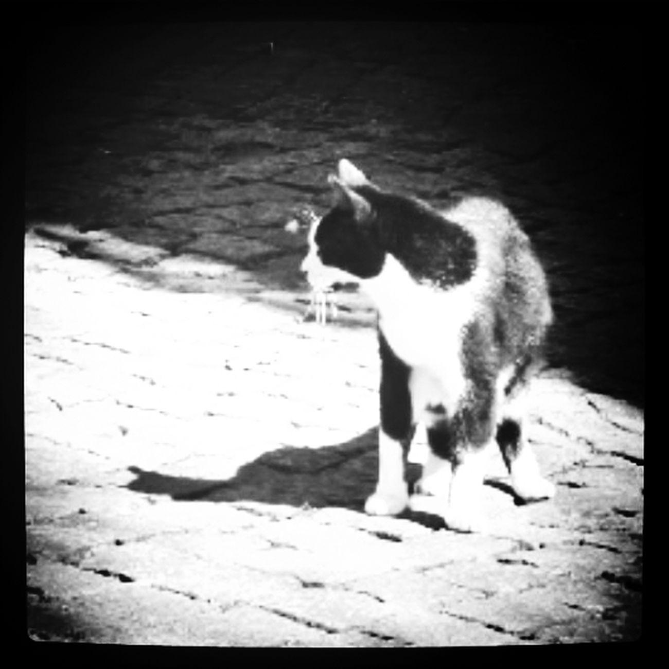 Se tu vieni, per esempio, tutte le mattine alle dieci, dalle nove comincerò a essere felice... Cat♡ Jornalistasdeimagens Bnw_collection Enjoying Life