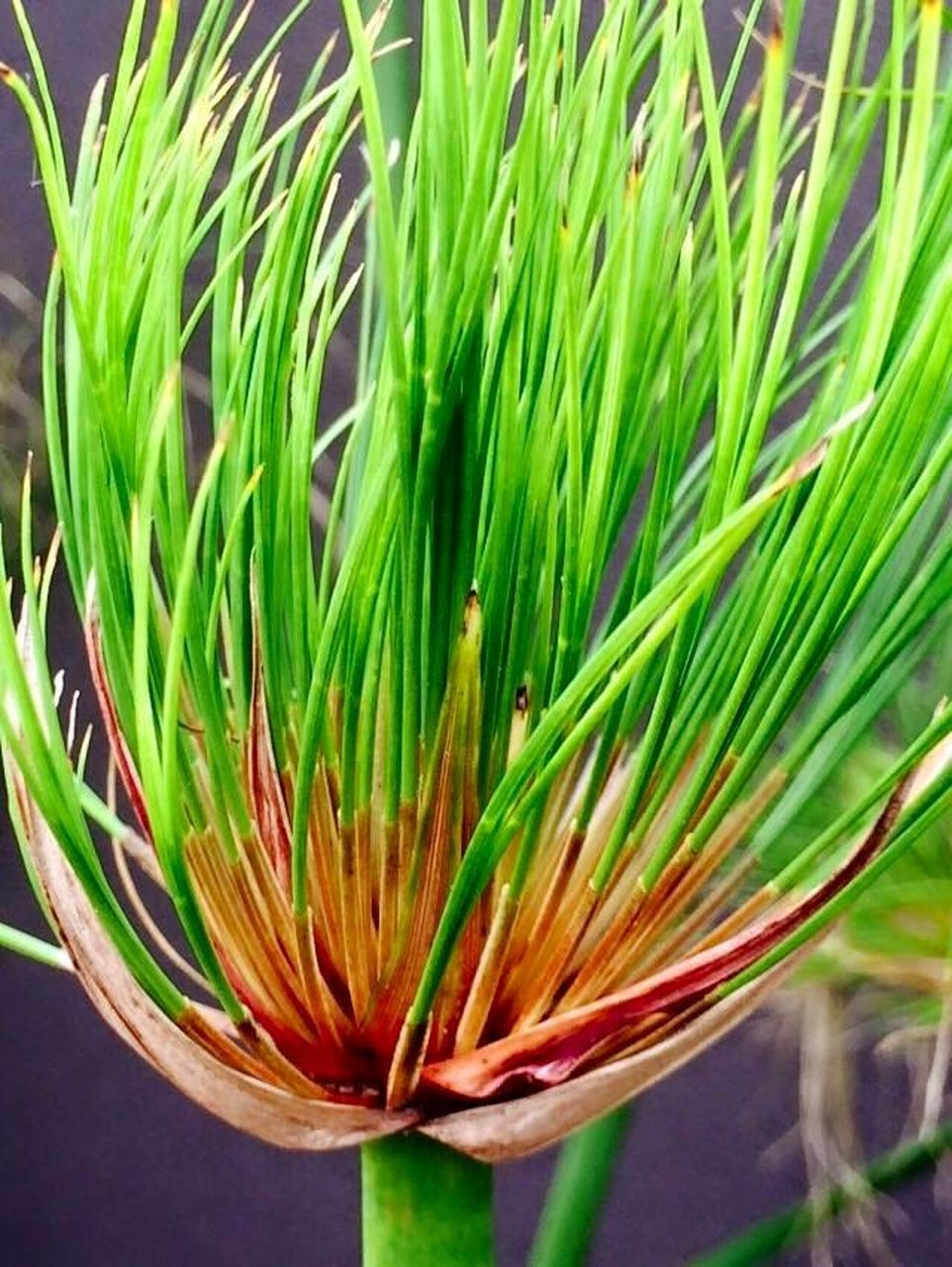 flower, growth, green color, plant, fragility, nature, freshness, beauty in nature, close-up, outdoors, day, flower head, no people