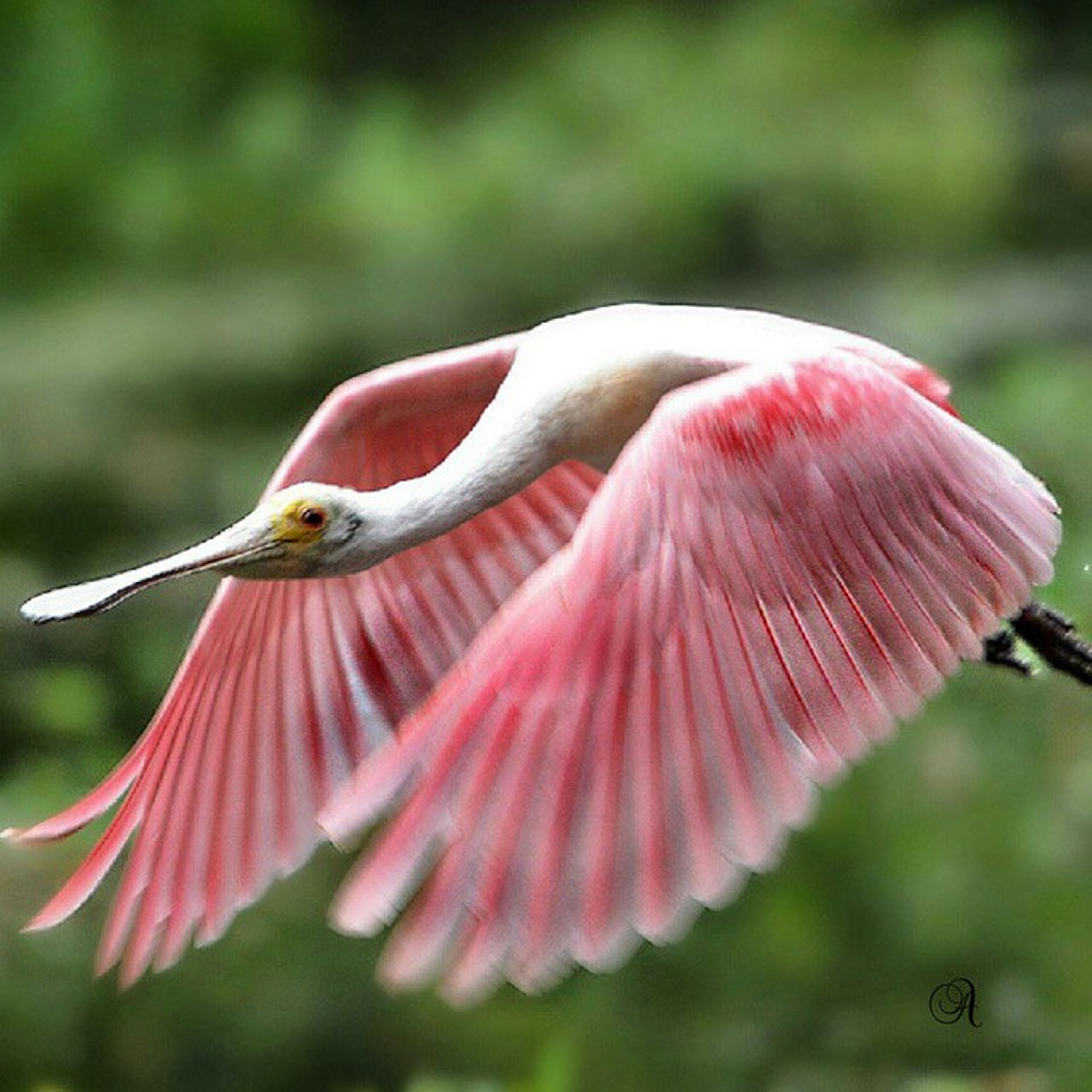 flower, animal themes, animals in the wild, wildlife, pink color, focus on foreground, one animal, close-up, freshness, petal, beauty in nature, fragility, nature, growth, flower head, selective focus, outdoors, day, single flower, bird