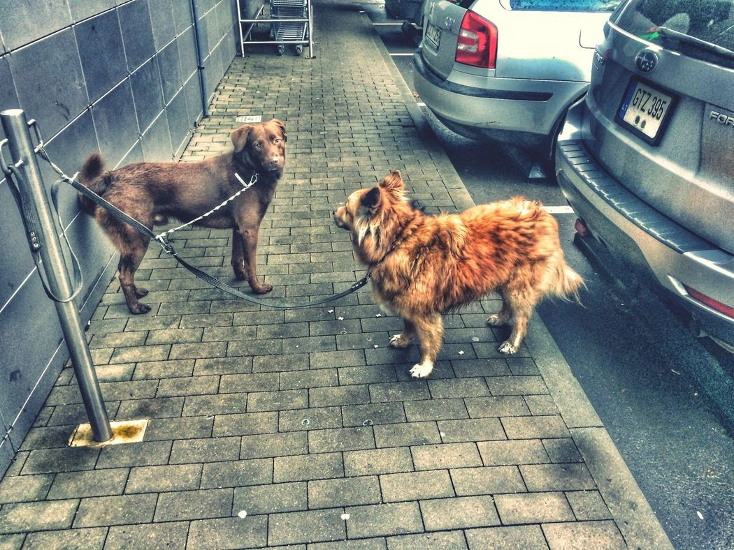 dogs, street, drama Pets Dog Outdoors No People First Eyeem Photo