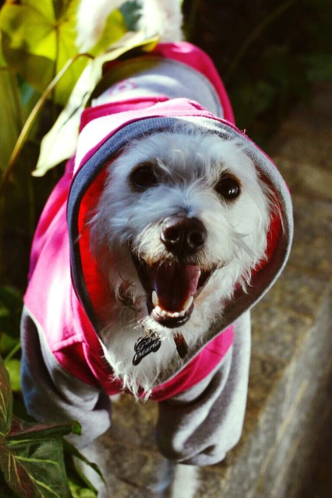 How not to be charmed by a dog hoodie? Hoodie Hoodieseason  Doglovers Dogs Of EyeEm Dog Love Mydog Gaia Maria Doglover Lovely Dog Dog Lover GaiaMaria Dogslife