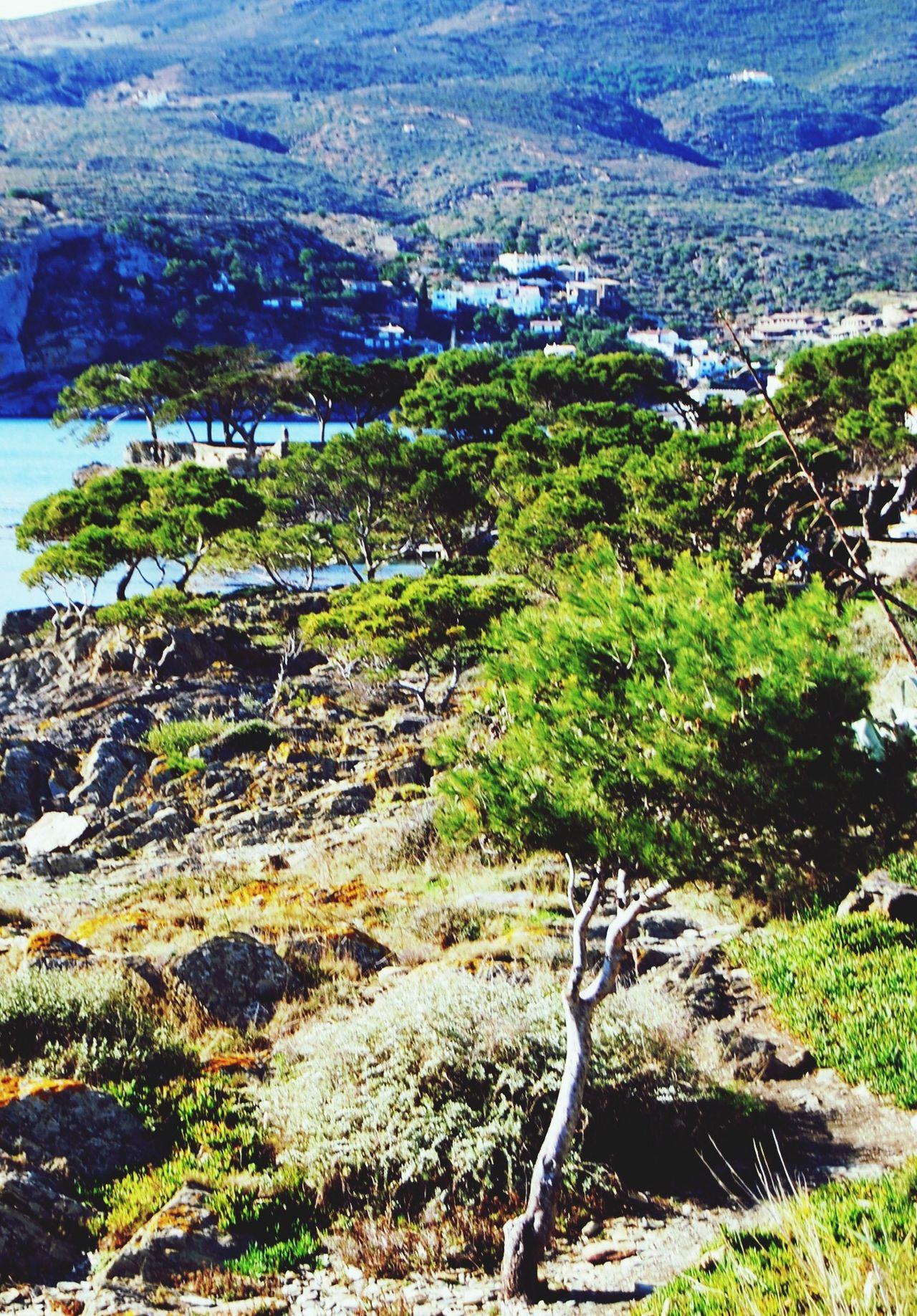 Clima Mediterráneo Costa Brava