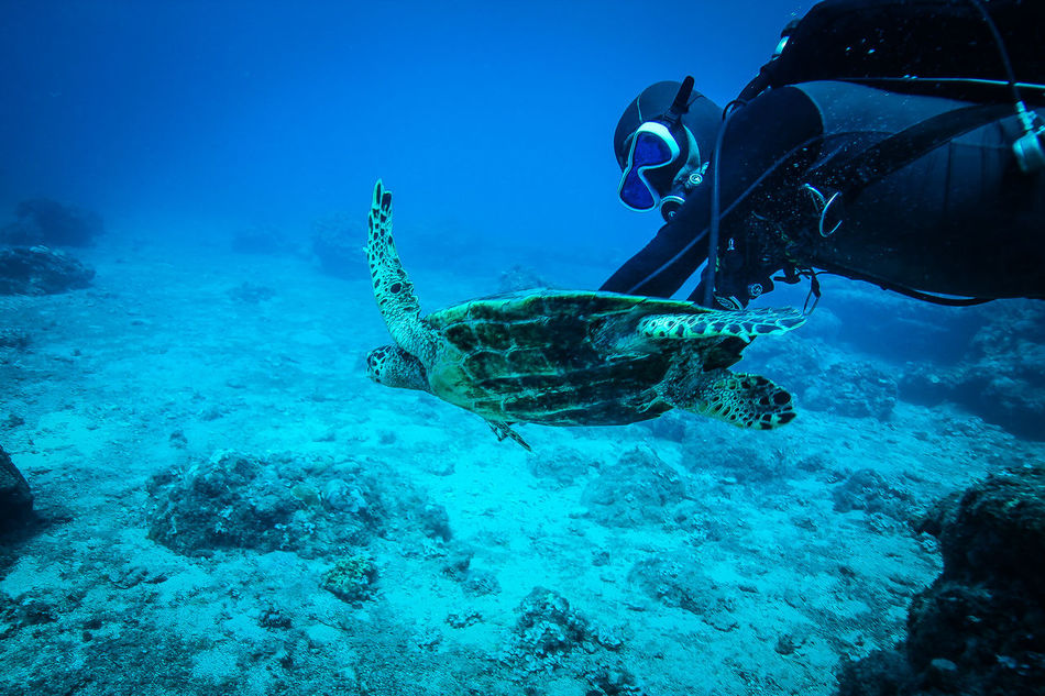 Beautiful stock photos of schildkröte, 45-49 Years, Adventure, Amphibian, Animal Themes