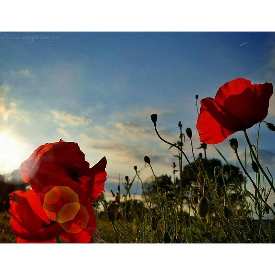 Quando il guerriero non si sente felice davanti al tramonto, c'è qualcosa di sbagliato... ❤ __________________________________ Latinalido Marinadilatina ReggioCalabria Catona ita_details LOVES_ITALIA ig_energy italiapm ig_europa ig_poesia loves_village ig_costarica ig_eurasia tramonti__italiani ig_mood latinascalo ig_europe visualmood alalamiya_mystics loves_Lazio_ loves_Roma_ stars_hdr sunset_madness_ ig_agropontino igerslatina