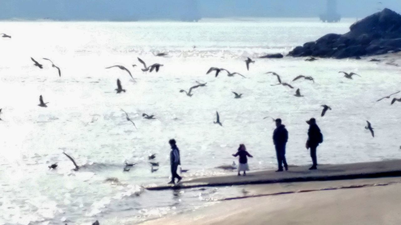 large group of animals, animals in the wild, animal themes, bird, sea, nature, animal wildlife, water, flock of birds, cold temperature, outdoors, penguin, beach, day, beauty in nature, winter, snow, silhouette, horizon over water, no people, colony, togetherness, sky