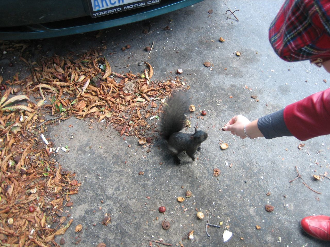 Cropped Image Of Woman Feeding Squirrel On Street