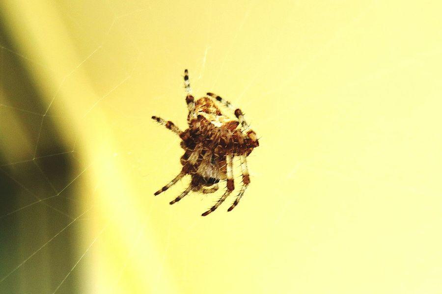 Eeeeeek!! Spider Check This Out Bug Scary Arachnid Eight Legs