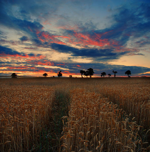 Agriculture Beauty In Nature Bocage Cloud Cloud - Sky Cloudy Crop  Field Growth Horizon Over Land Idyllic Landscape Nature Normandy Orange Color Outdoors Plant Remote Rural Scene Scenics Sky Sunset Tranquil Scene Tranquility Vire