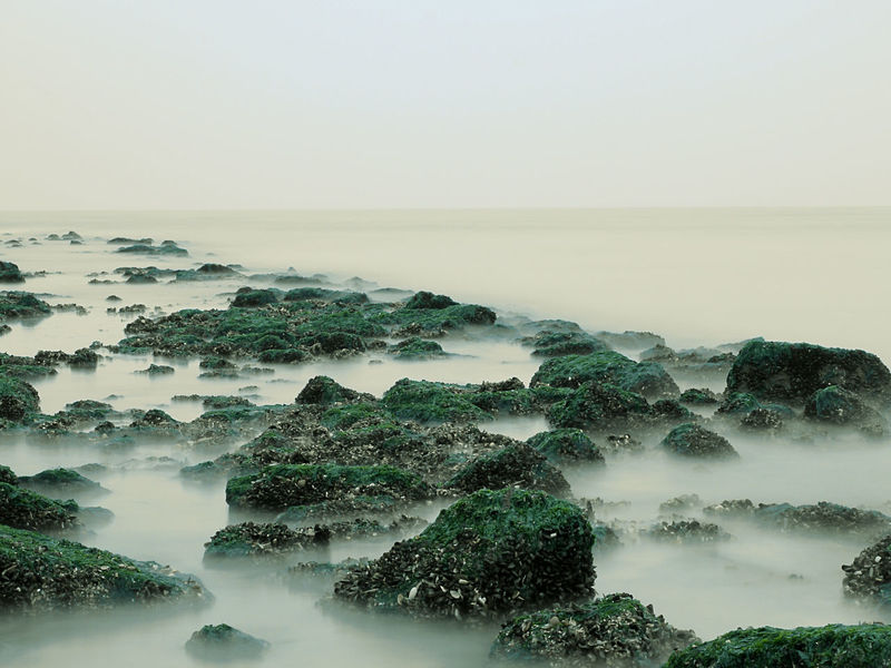 Rocks in a foggy sea, long exposure over water effect Beach Blue Cliff Coastline Dream Dreaming Elevated View Fog Fog Over Water High Angle View Holland Horizon Over Water Long Exposure Minimalism No People North Sea Ocean Outdoors Rock Rock - Object Rock Formation Sea Seascape Water Wonderland