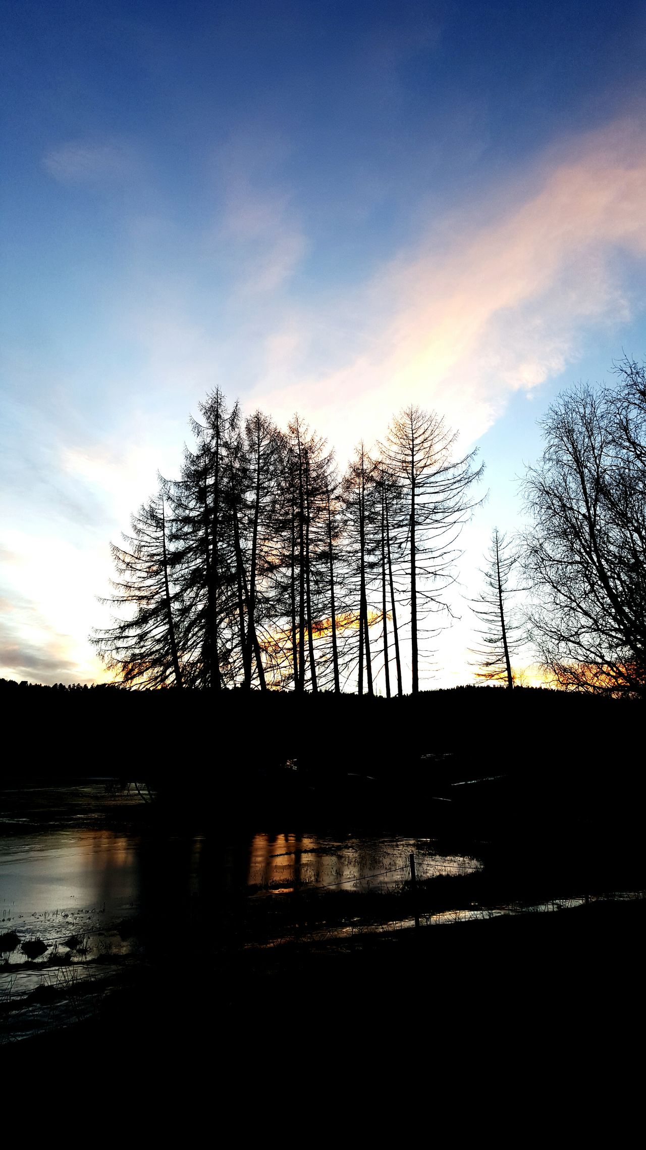 December light Winter Solstice Sky And Clouds Eye4nature Eye4photography  Norway Trondheim Landscape Concert Photography Trees Tree_collection