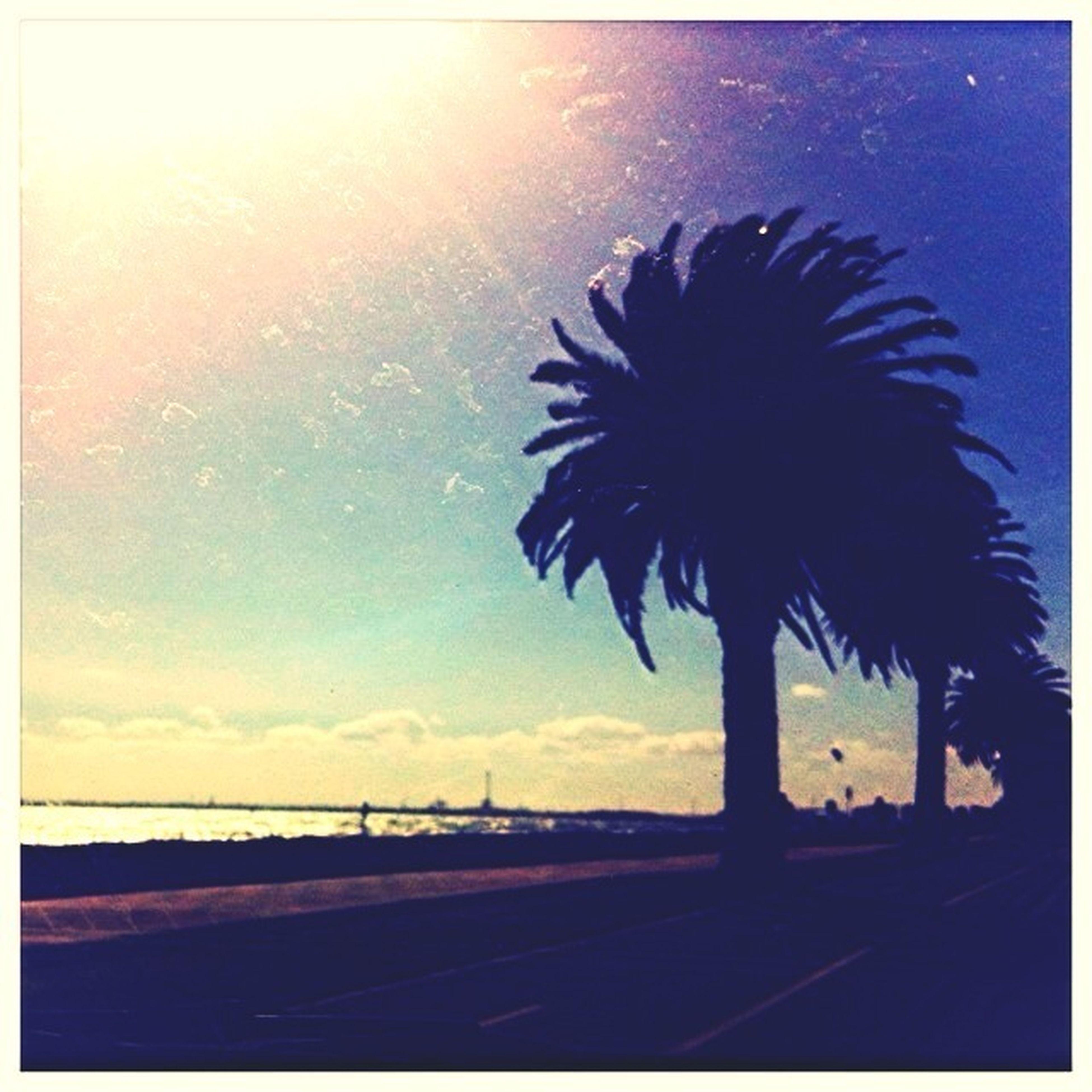 palm tree, sun, sea, silhouette, sunset, water, tranquility, beauty in nature, tranquil scene, sky, horizon over water, scenics, beach, nature, sunlight, sunbeam, idyllic, shore, auto post production filter, tree