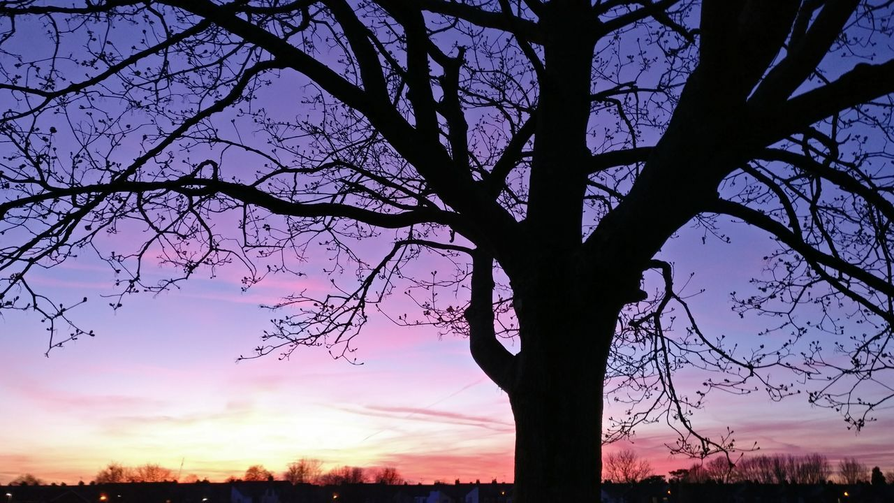 tree, sunset, beauty in nature, silhouette, sky, nature, branch, scenics, bare tree, tree trunk, tranquility, tranquil scene, growth, no people, outdoors, low angle view, landscape, day