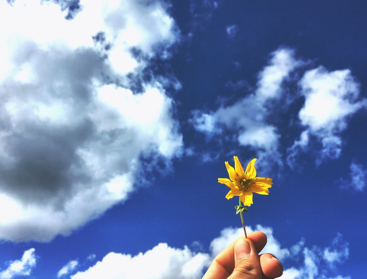 Human Hand Sky Holding Human Finger Flower Nature Real People One Person Cloud - Sky Outdoors Low Angle View Human Body Part Freshness Day Fragility Beauty In Nature Close-up Flower Head Blue Beauty In Nature Photography