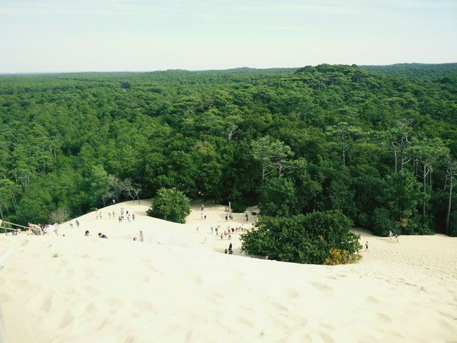 Arcachon Dune Du Pyla France Sable Foret Ocean Landscape Tree Tranquil Scene Tranquility Green Color Scenics Field Nature Non-urban Scene Growth Beauty In Nature Horizon Over Land Sky Day Outdoors Lush Foliage Abundance Horizon In Front Of