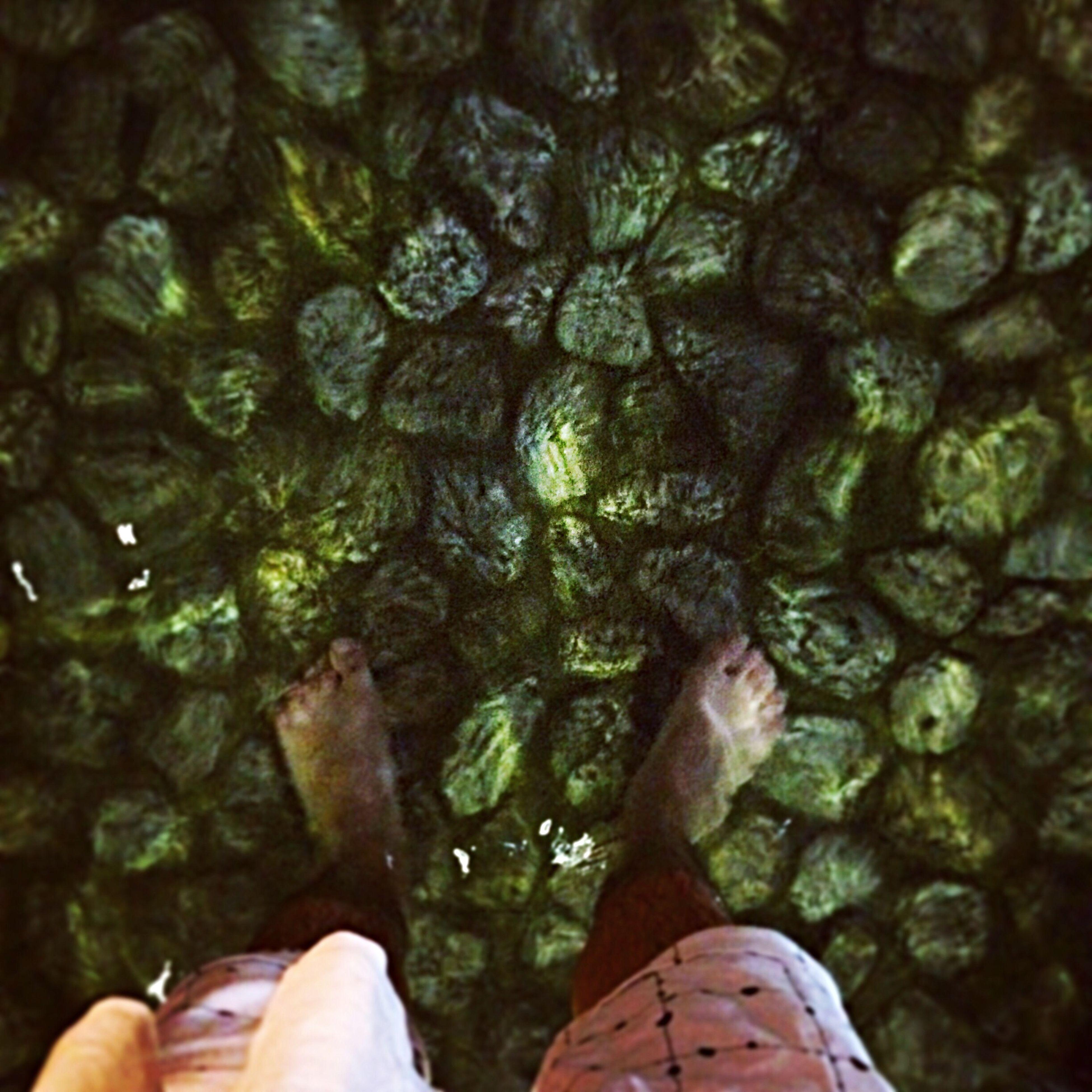池の水は冷たかった。 Kyoto