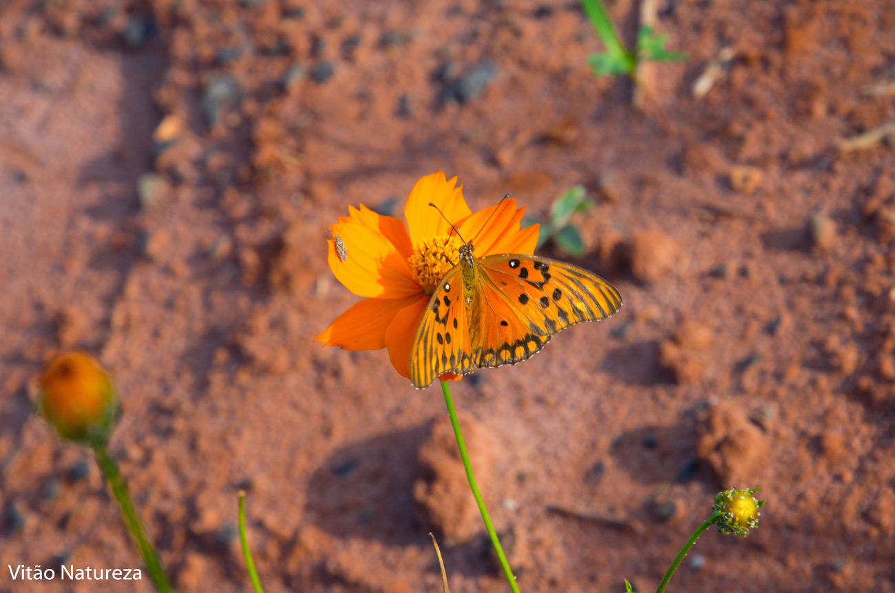 Nature Flower Beauty In Nature Butterfly Streetphotography Victornatureza Olharnatural Fotodocumental Artphotohraphy Naturzaurbana