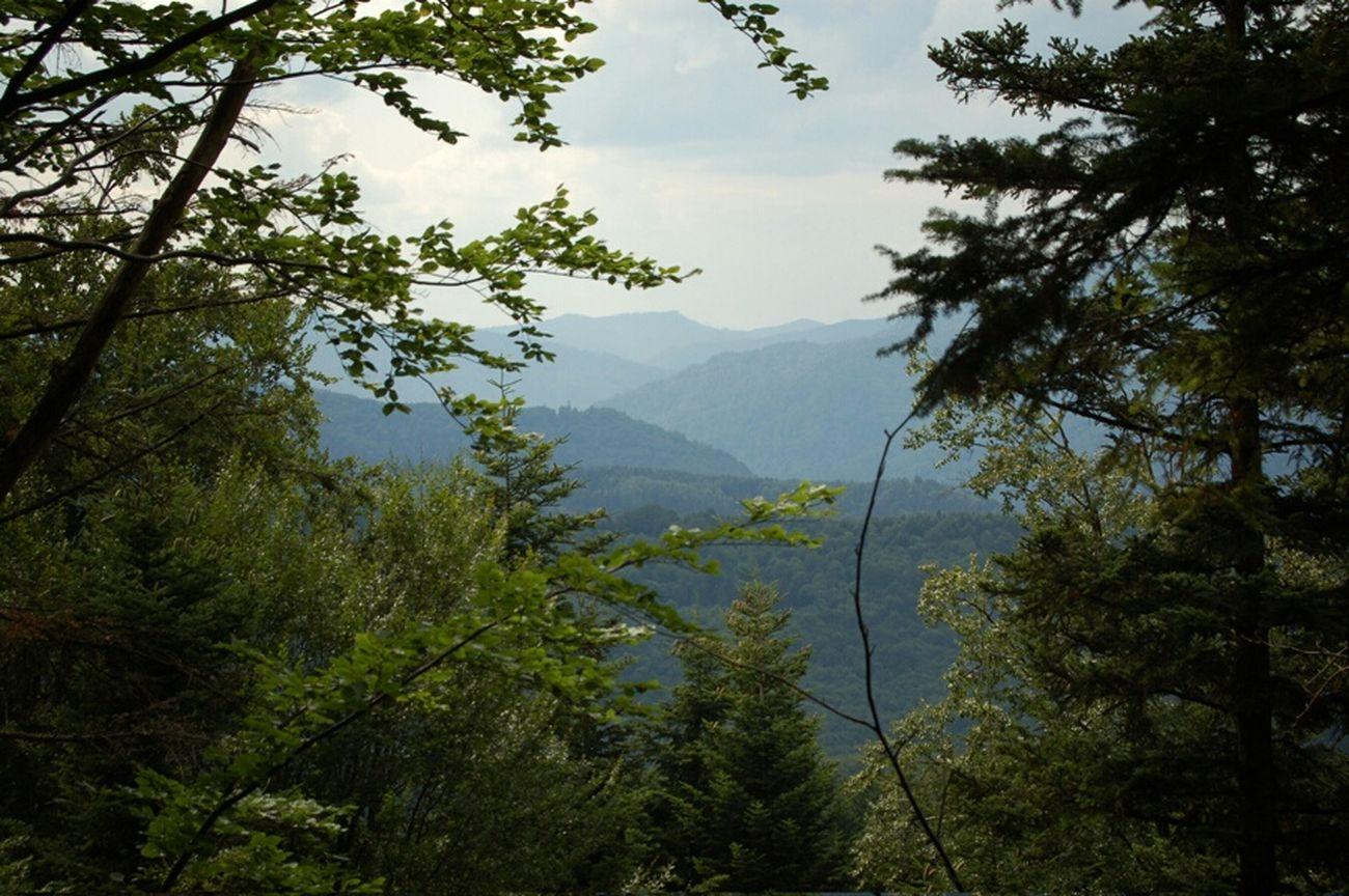 Karpathian Mountains Sea Montagna