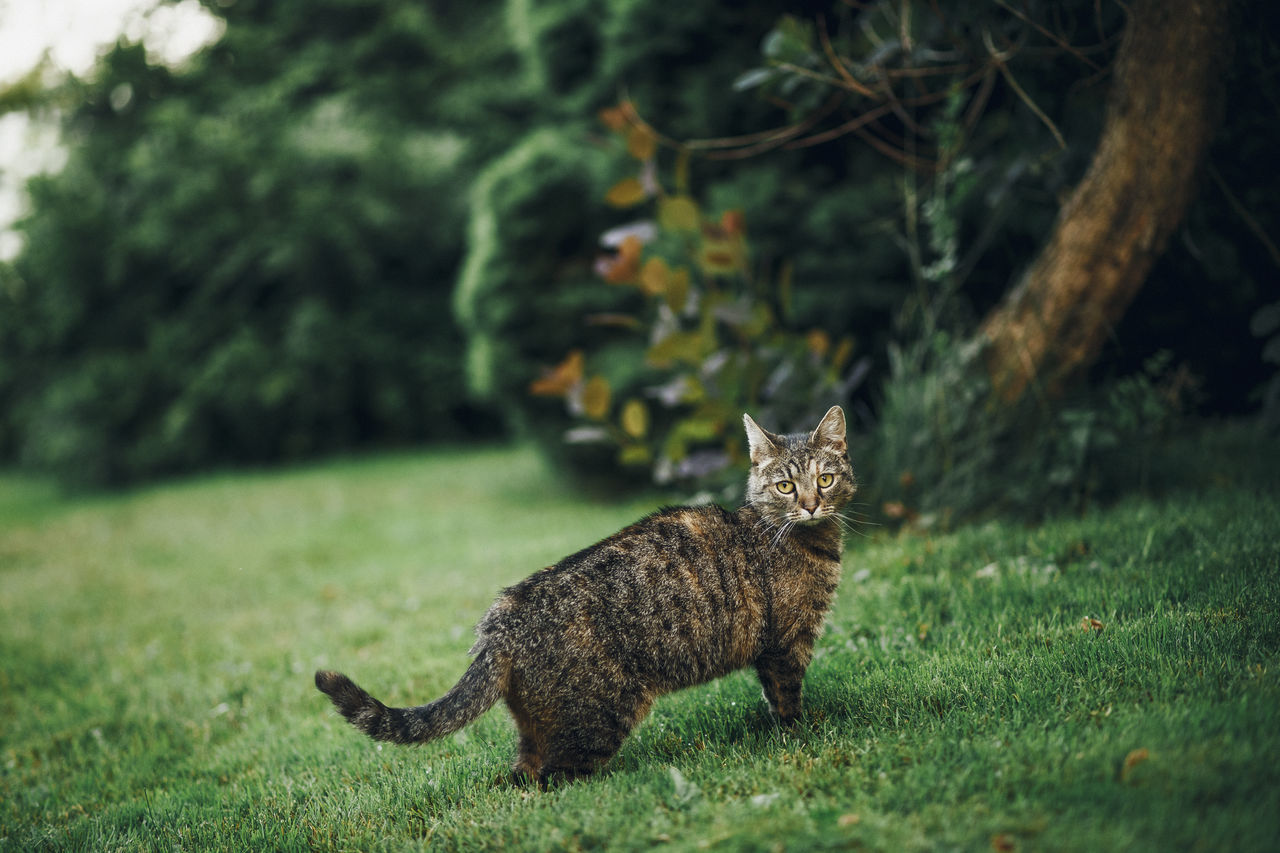 Lazy Sunday in Mielec, Poland. Animal Themes Day Domestic Animals Domestic Cat Feline Full Length Grass Mammal Nature No People One Animal Outdoors Pets Tree