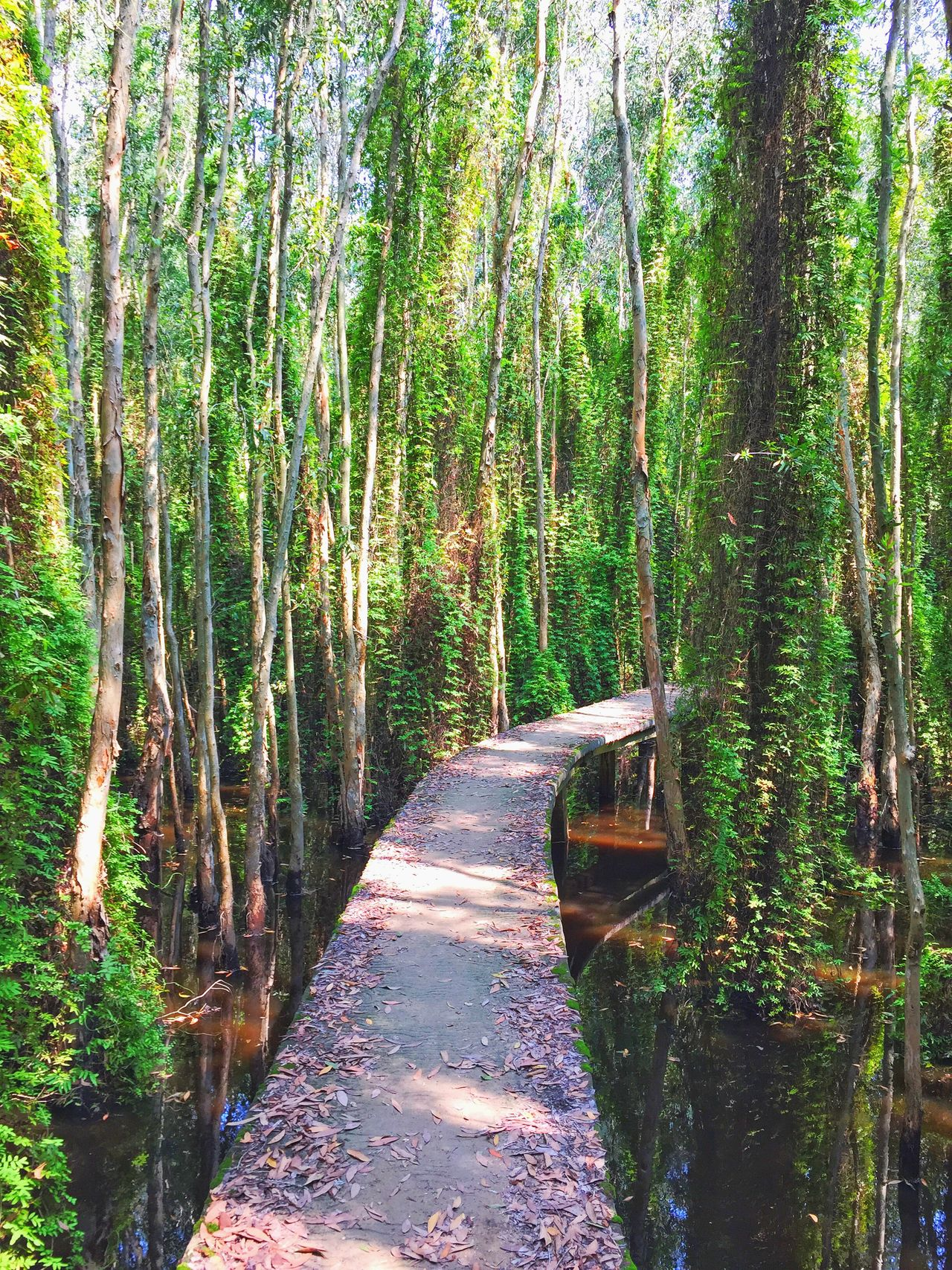 get lost in Melaleuca Forest Vietnam Trees Leaves Road Water Flowers Insects  Longan Thebroadlife