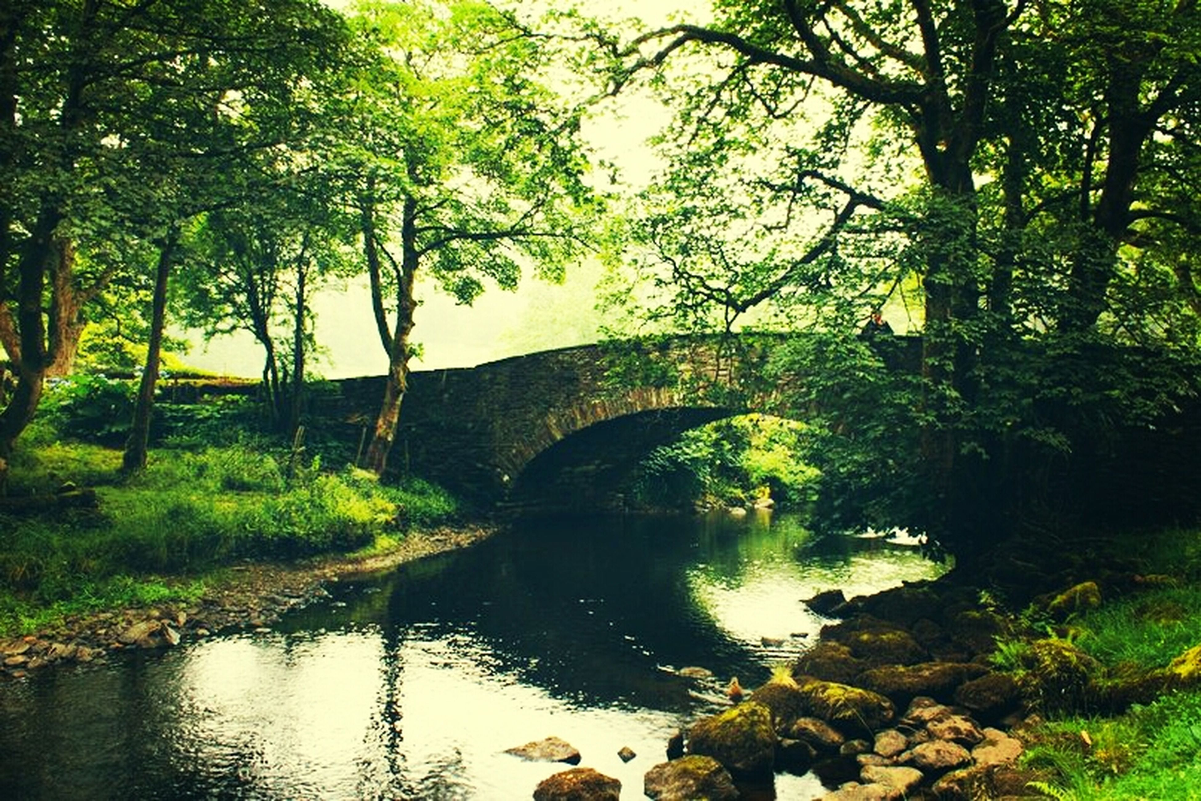 tree, water, built structure, architecture, bridge - man made structure, reflection, connection, river, animal themes, arch, arch bridge, tranquility, nature, bridge, plant, lake, growth, tranquil scene, green color, bird