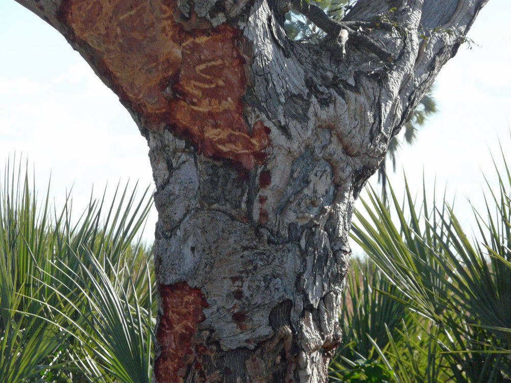 Africa Beauty In Nature Close-up Day Growth Nature No People Okavango Delta Outdoors Texture Textures Tree Tree Trunk Tusk Marks The Great Outdoors - 2017 EyeEm Awards EyeEmNewHere