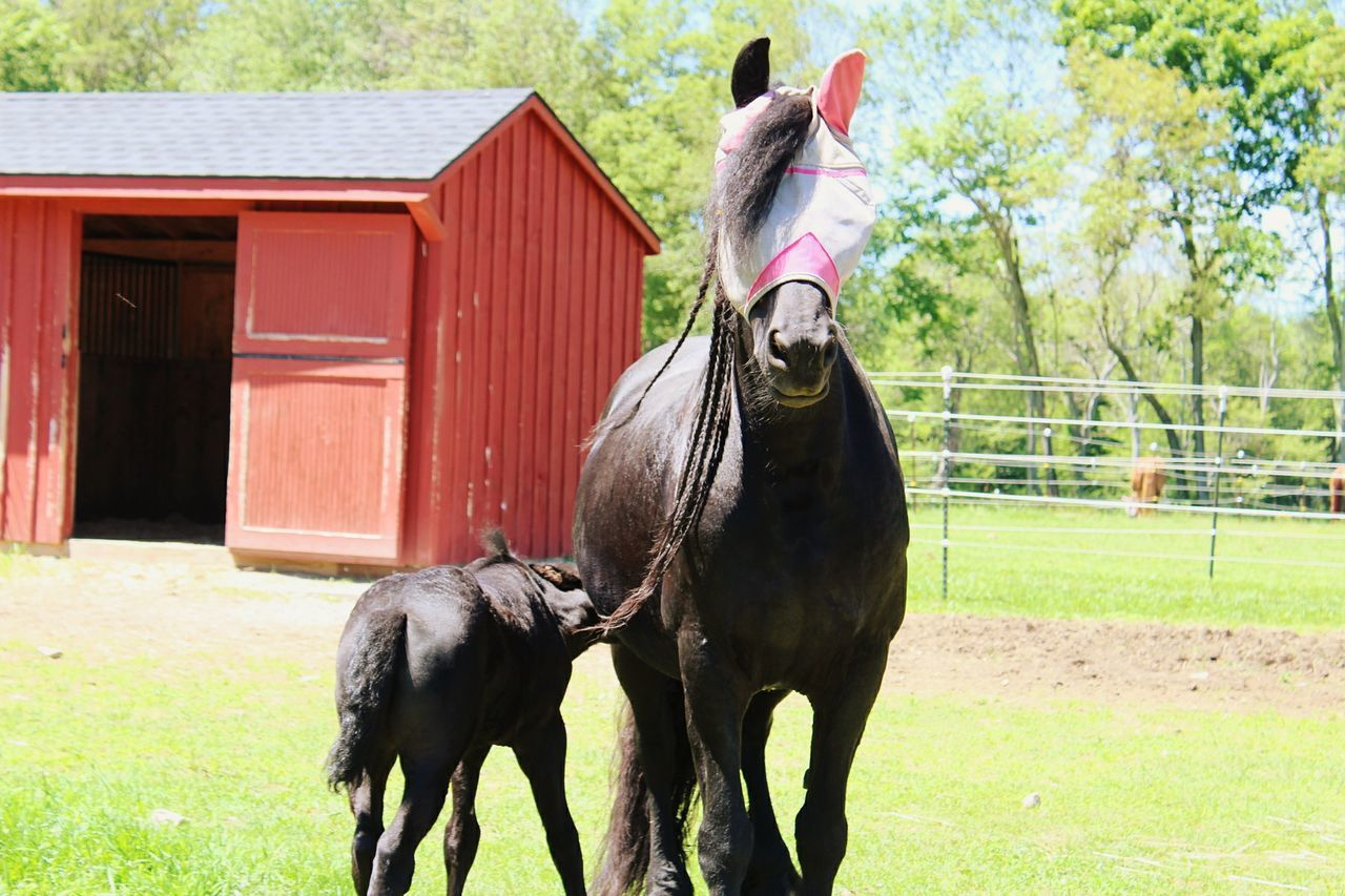 Nature Agriculture Horse Mother & Daughter Baby Horse Mama Horse Summer EyeEmNewHere