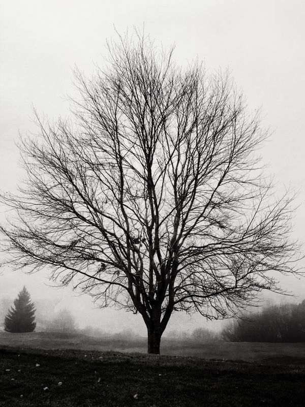 IPS2915 Trees Switzerland Foggy Gruyères Black And White IPS2015Trees