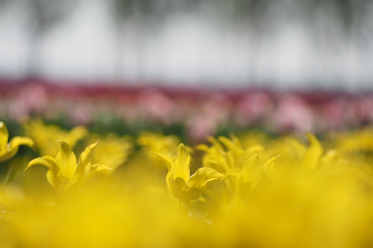 fo Focus On Foreground Tullips Creative Power Nature Photography Landscape_Collection Colors Of Nature Blurred Background The Great Outdoors - 2016 EyeEm Awards The Great Outdoors With Adobe Colour Of Life Privotal Ideas